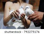 white doves white doves in the... | Shutterstock . vector #792275176