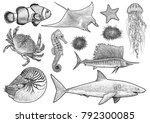 marine animals collection... | Shutterstock .eps vector #792300085