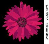gerbera daisy. vector flower... | Shutterstock .eps vector #792314896