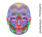 muscles of the face structure ... | Shutterstock .eps vector #792326692