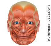 muscles of the face and the... | Shutterstock .eps vector #792337048