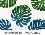 green leaf of a tropical flower ... | Shutterstock . vector #792402892