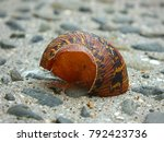 voided snail shell remnant... | Shutterstock . vector #792423736