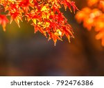 maple tree in autumn beautiful... | Shutterstock . vector #792476386