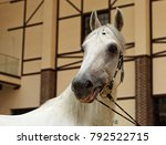 thoroughbred horse with bridle... | Shutterstock . vector #792522715
