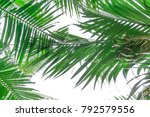 uprisen angle view of coconut... | Shutterstock . vector #792579556