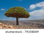 Dragon Trees At Dixam Plateau ...