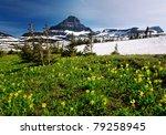 Spring Wildflowers In Glacier...