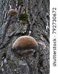 brown mushroom on the tree.... | Shutterstock . vector #792730672