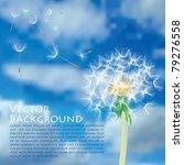 vector dandelion with flying... | Shutterstock .eps vector #79276558