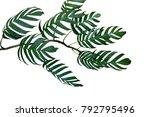 dark green leaves of monstera...   Shutterstock . vector #792795496