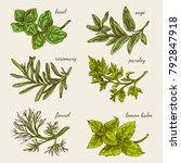 set of herbs for kitchen. basil ... | Shutterstock .eps vector #792847918
