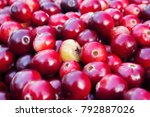 rustic background with red...   Shutterstock . vector #792887026