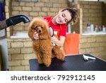 female groomer brushing... | Shutterstock . vector #792912145