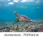 a juvenile hawksbill turtle is...   Shutterstock . vector #792926116