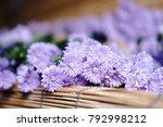 Purple Marguerite Daisy Flower...