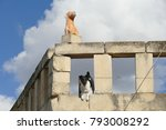 Small photo of Angry and sneaky dog barking at tourists aggressively on a rooftop terrace directly under a stone dog statue - scene on the neighboring island of Malta, Gozo - Island