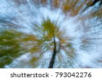 Beech Forest Abstract