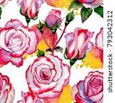 wildflower hybrid rose flower... | Shutterstock . vector #793042312