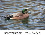 Small photo of American Wigeon (Anas americana) male in Japan