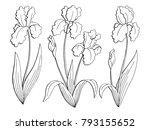 iris flower graphic black white ...   Shutterstock .eps vector #793155652
