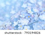 Spring Blue Forget Me Nots...
