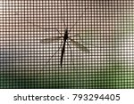 Small photo of Mosquito on window screen, closeup.Selective focus.