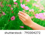 close up woman hand picking... | Shutterstock . vector #793304272