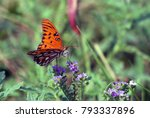 a butterfly with a flower | Shutterstock . vector #793337896