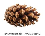 dry pine cone. isolated on... | Shutterstock . vector #793364842