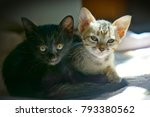 Stock photo  cute kittens everything about kittens a kitten also known as a kitty 793380562