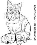 cat portrait black and  white.... | Shutterstock .eps vector #793406905