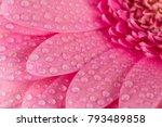 Pink Gerbera Flower Blossom...
