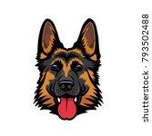 German Shepherd Dog   Isolated...
