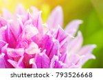 Flower Of Clover. Macro.