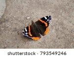 vanessa atalanta  red admiral... | Shutterstock . vector #793549246