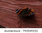 vanessa atalanta  red admiral... | Shutterstock . vector #793549252