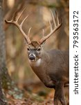 a huge white tailed deer in the ... | Shutterstock . vector #793563172