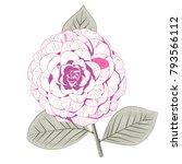 pale pink camellia japonica... | Shutterstock .eps vector #793566112