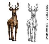 elk wild animal sketch vector... | Shutterstock .eps vector #793611802