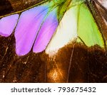 Detailed Macro Of A Wing Of...