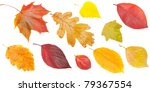 Set Of Yellow And Red Leaves ...