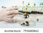 scientist testing gmo plant in... | Shutterstock . vector #793680862