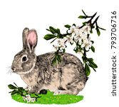 bunny sitting on the grass next ...   Shutterstock .eps vector #793706716