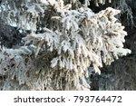 winter tree spruce in the snow | Shutterstock . vector #793764472