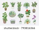 home indoor plants hand drawn... | Shutterstock . vector #793816366