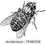 horse fly tabanus bovinus | Shutterstock .eps vector #79384528