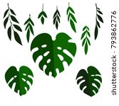 vector set of tropical palm... | Shutterstock .eps vector #793862776