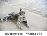 Cat Lying On Sidewalk