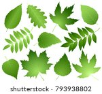 hand drawn green leaves and... | Shutterstock .eps vector #793938802